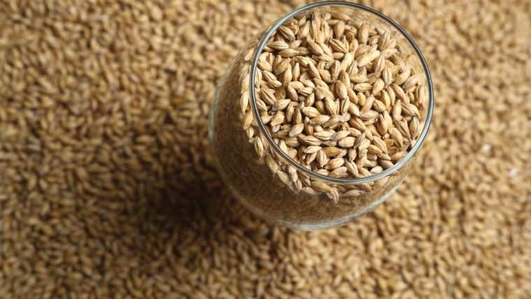 Glass of grains for making beer