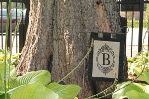 Historic Catalpa Tree_Brewery Becker Brighton MI_Biergarten_IMG_6473