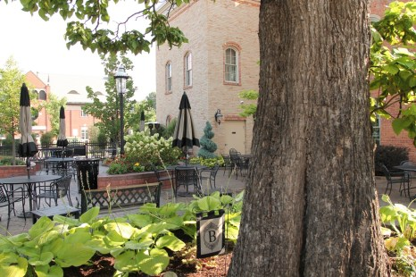 Historic Catalpa Tree_Brewery Becker Brighton MI_Biergarten_IMG_6499