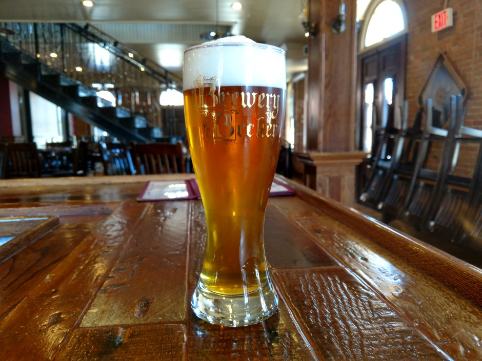 pint of Maibock beer at Brewery Becker on bartop
