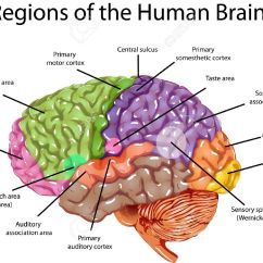 Left Side Brain Functions Diagram How To Draw Bar Seeking A Predominant Theory Of Mind Dualism Versus