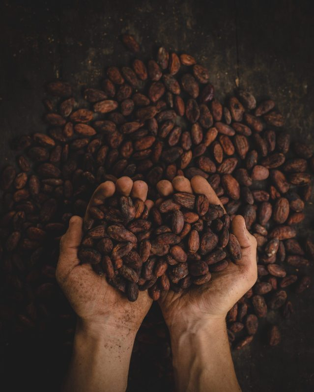 Le cacao et ses conséquences sur la bière