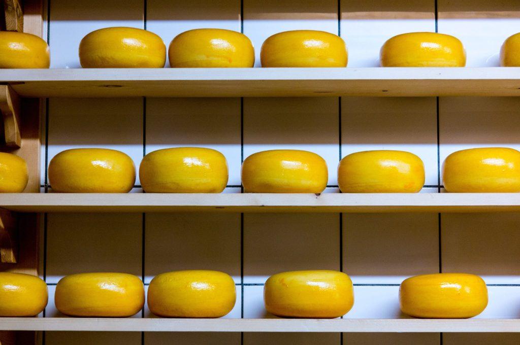 fromage à pâte pressée non cuite