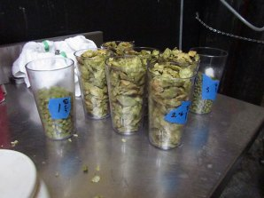 Hops waiting to be added to the hobby system at Buckman Brewing.