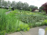 After entering the first garden you see are these large ponds.