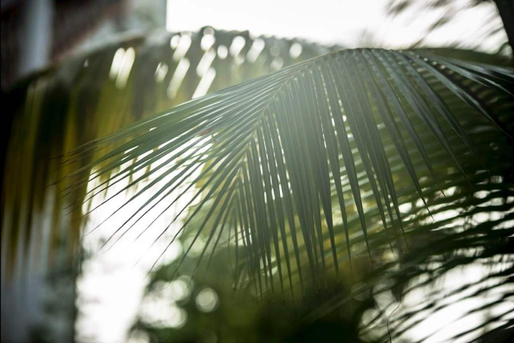 tulum-palms