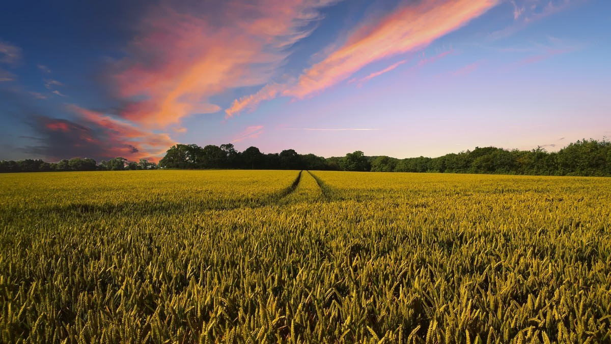 How to reform rural payments and make a 'green Brexit' a reality