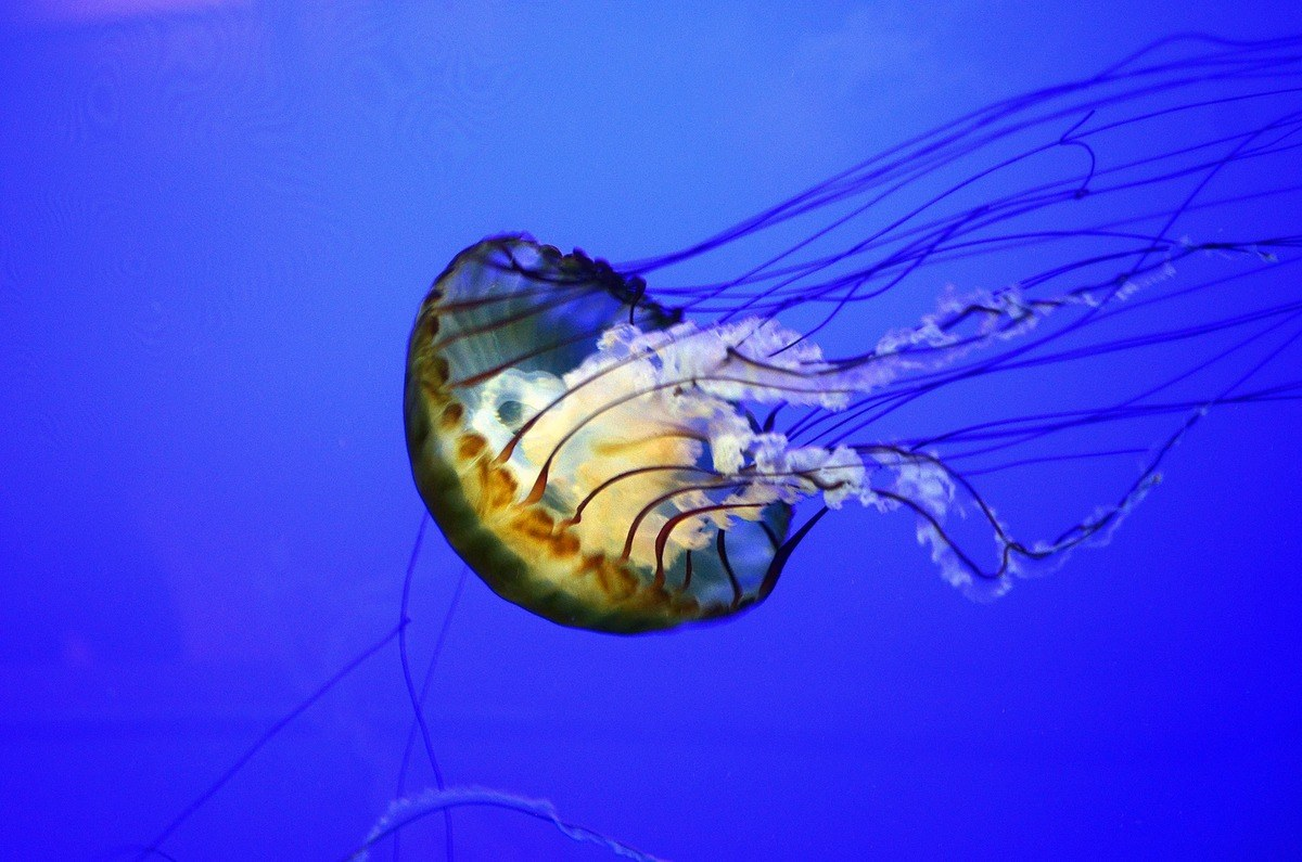 Beware: we are negotiating with a giant EU jellyfish