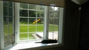 Rasputín by the window