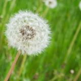 Organic Weed Control Service