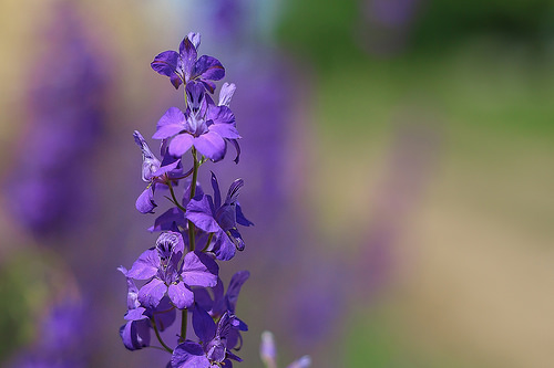 Purple summer flowers - spending time in nature can help you stress less!
