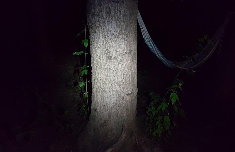 Lumintop IYP365 Tree Medium Mode