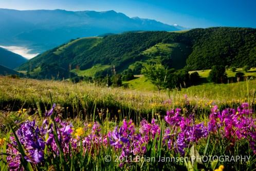 Umbria Italy Castelluccio Monti Sibillini Norcia Wildflowers Dawn