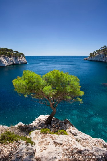 Lone Pine Tree Calanques Cassis Provence France
