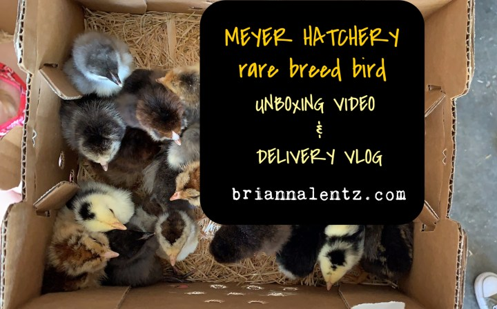 Meyer Hatchery Rare Breed Chick Unboxing Video and Vlog