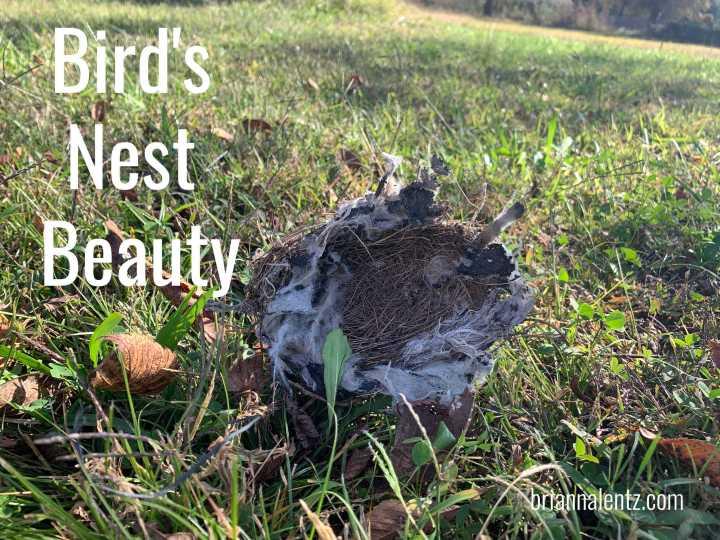 Bird's Nest Beauty