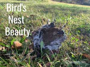 Bird Nest Post Title