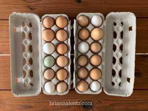 Brianna Lentz Free Range Farm Fresh Eggs