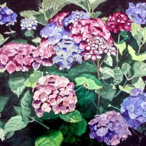 Hydrangea, 22x30, Watercolor on paper - $1,600