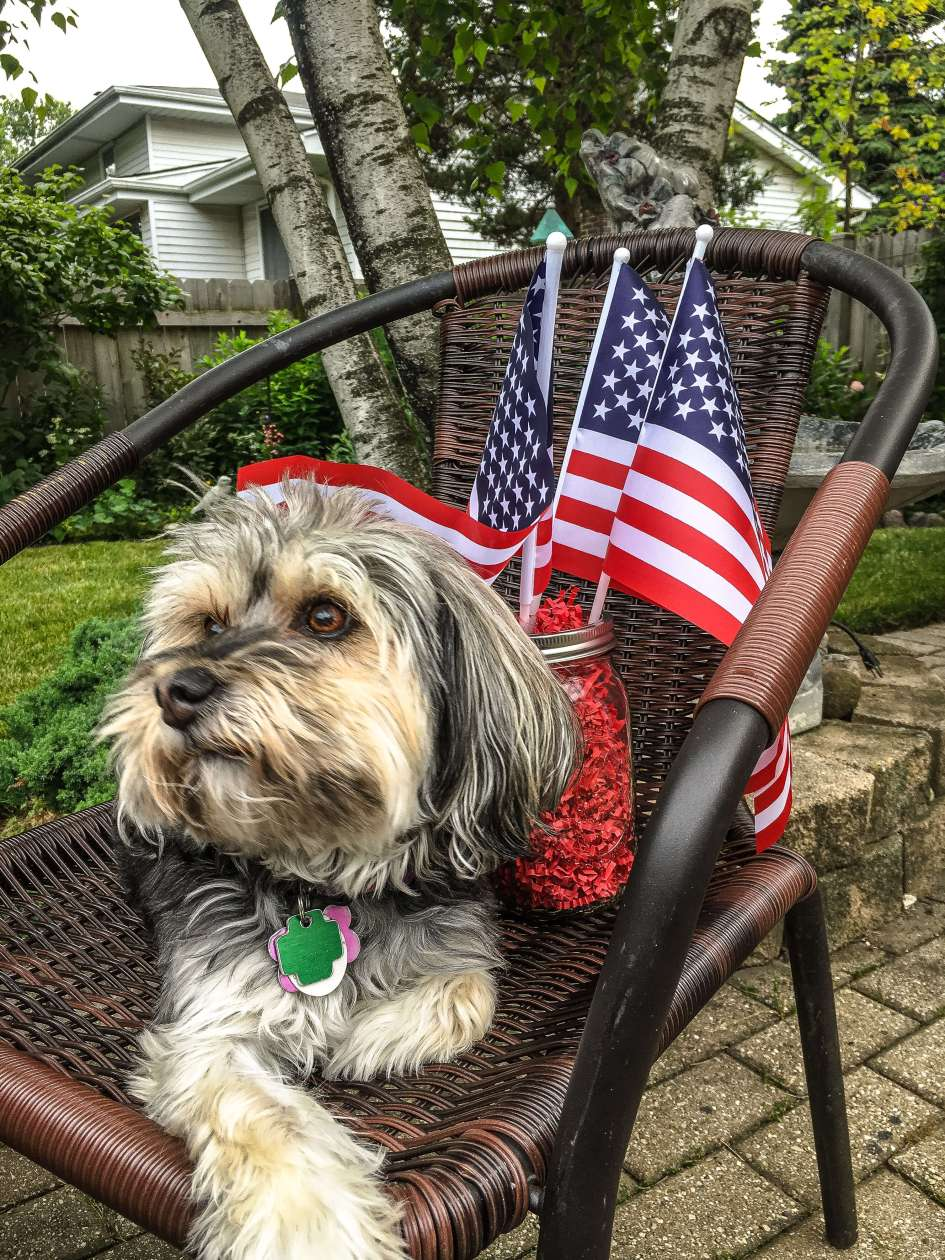 Murphy - Dog Photography - Patriotic - 4th of July