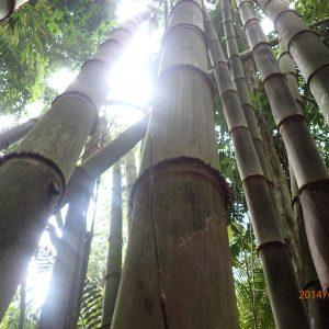 Bamboo & Grass