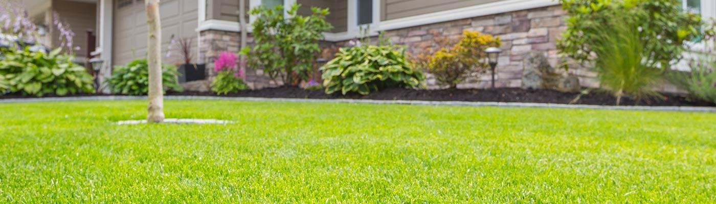grassy-lawn