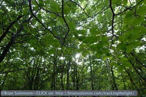 Verdun_Le_Mort_Homme_forest_P1050690