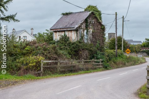 Killeagh is easily missed. The line is almost complete overgrown, yet the old cabin survives. Lumix LX7 photo.