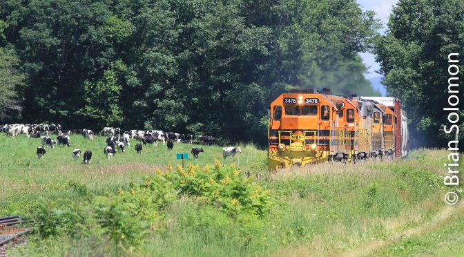 Weedy Summer: New England Central 611 at Vernon, Vermont.