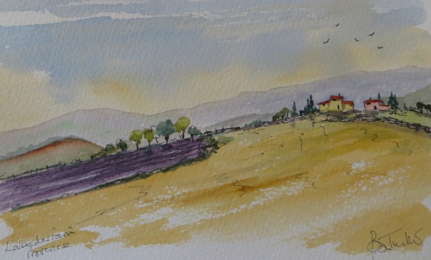 Lavender fields in Haut Provence