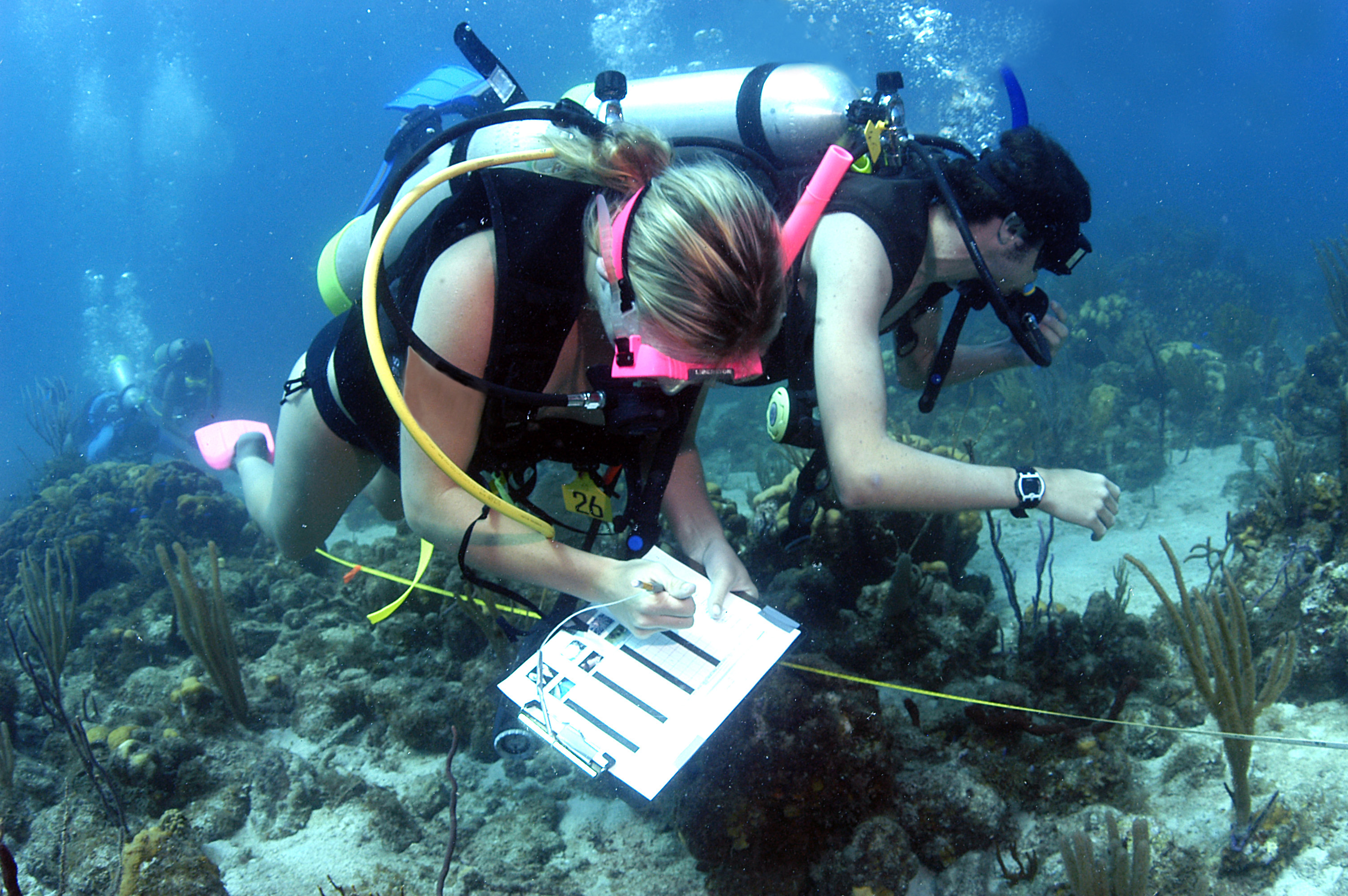 How To Become A Marine Biologist  Dr Abalone