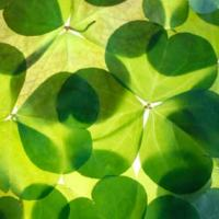 Cute Ideas for Your St. Patrick's Day Party