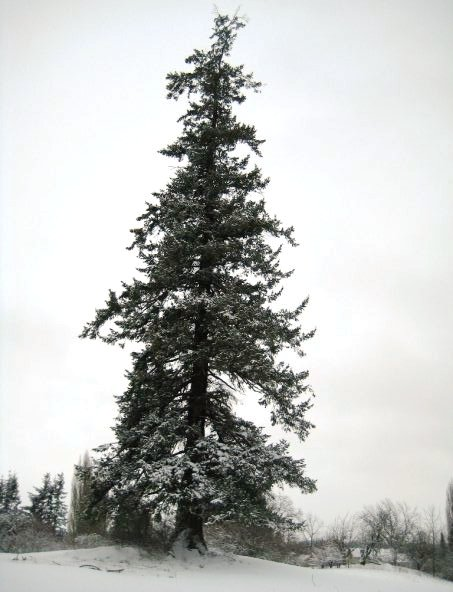 Nate's photo of the tree on the hill