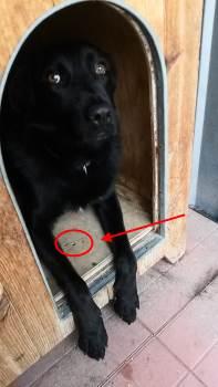 Coibentare La Cuccia Del Cane In Inverno