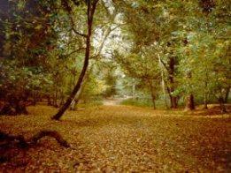 La magia del bosco