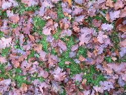 foglie - secche