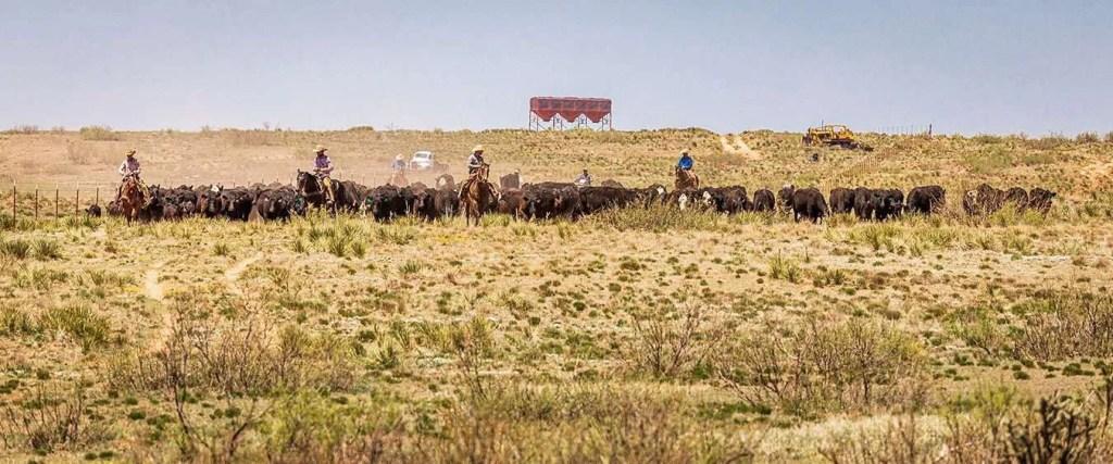 smith ranch - 050621-4245-2