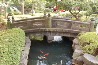Koi pond bridge.