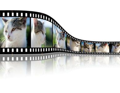 How to Use Windows Live Movie Maker to Create Professional Content