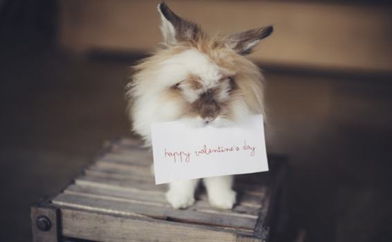 Seasonal vs. evergreen content: How to tailor your content for Valentine's Day and beyond