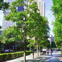New guidance to increase natural settings into urban spaces