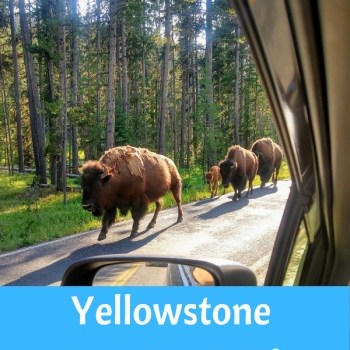 Yellowstone National Park Camping Guide 2021