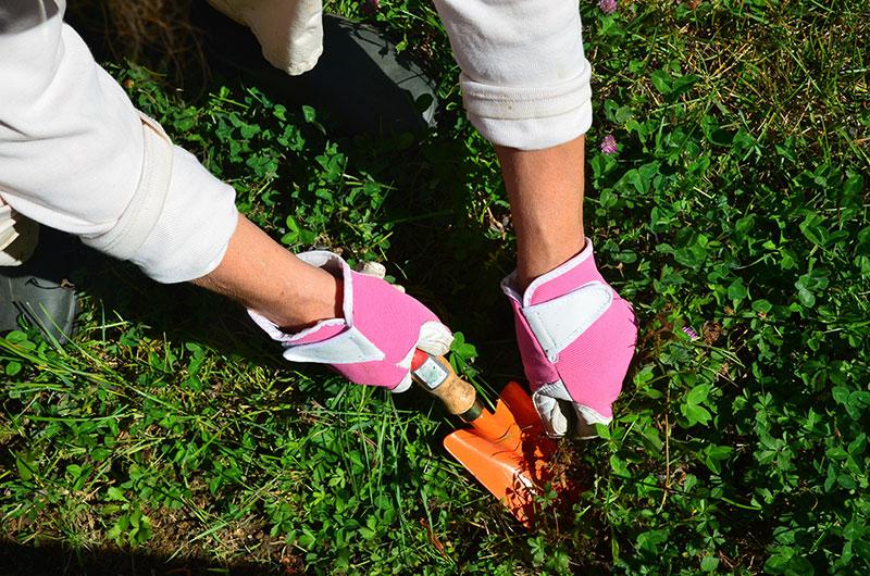 14 remèdes maison pour arrêter les mauvaises herbes ?
