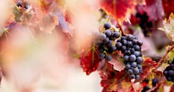 Harvest Winery Wedding by Brady Puryear 31
