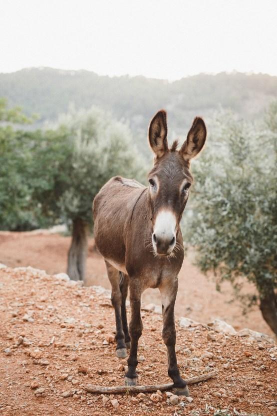 The Dreamiest Mallorca Mountain Bridal Inspiration – Vivid Symphony 64