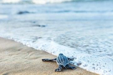 St Regis Bahia Beach – Puerto Rico – Dream Tropical Destination Wedding Venue – Bridal Musings 18