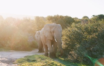 Why Our South African Honeymoon Was The Best Month Of My Life