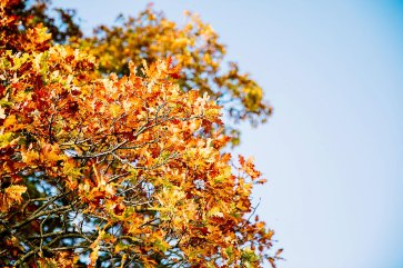 An Autumn Wedding at The Star (c) Hayley Baxter Photography (4)