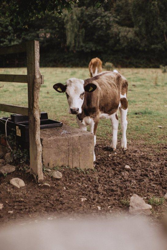 A Rustic Farm Wedding Shoot in North Wales (c) Fox & Bear Photography (40)