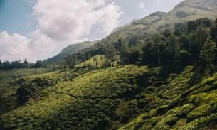 Wayanad photo essay : 50 shades of green